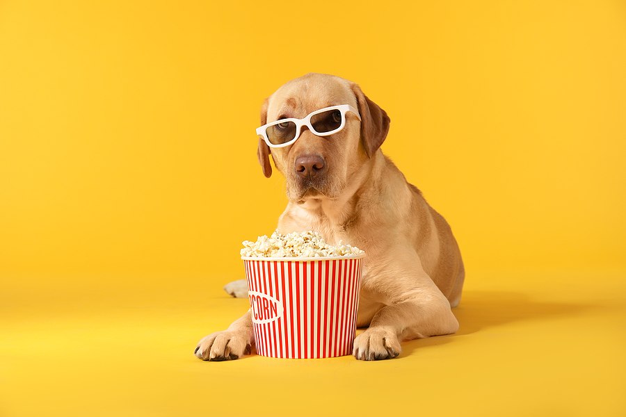 Adorable dog with bucket of popcorn and 3d glasses © bigstockphoto.com / Studio-pixeltext