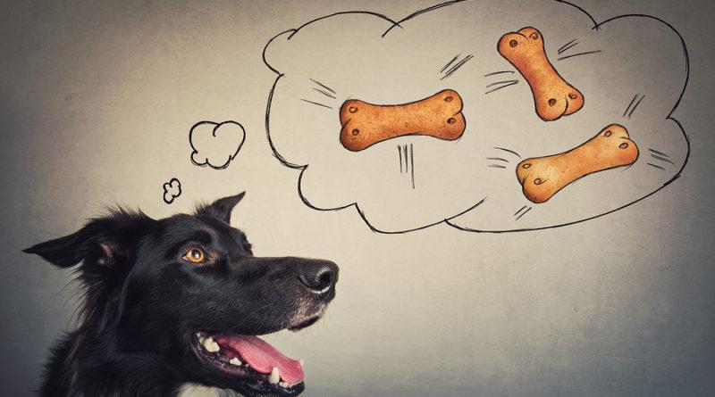 Joyful Border Collie Dog thinking of dog biscuits © bigstockphoto.com / 1STunningArt