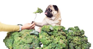 can dogs eat broccoli © bigstockphoto.com / Varnava_photo