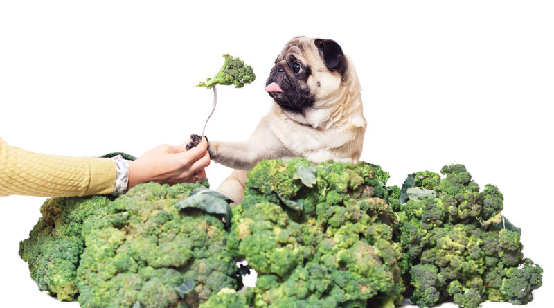 can dogs eat broccoli © bigstockphoto.com / Varnava_photo