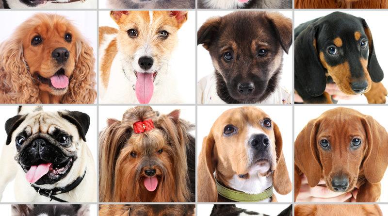 Dog portraits collage © bigstockphoto.com / Yastremska