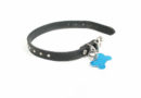 dog collar id © bigstockphoto.com / graphicphoto