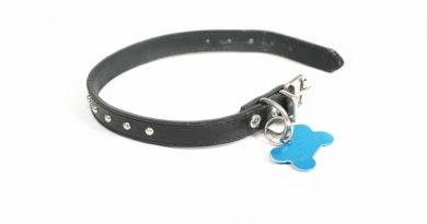 dog collar id © bigstockphoto.com / graphicphoto