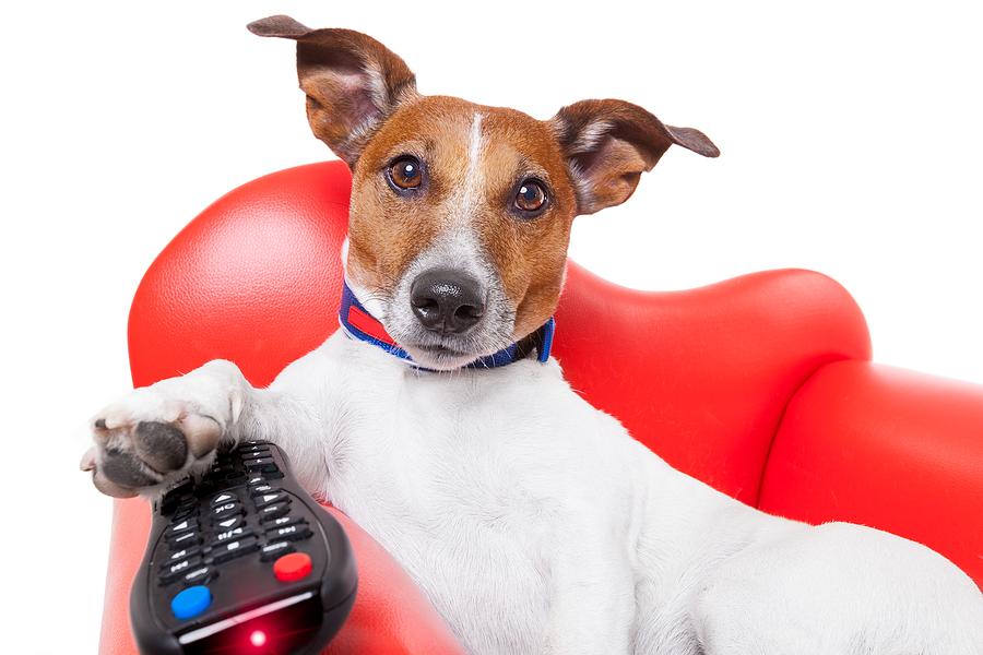 top 31 box office dog movies