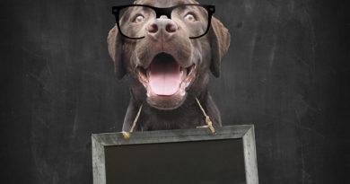 Dog School Teacher © bigstockphoto.com / manonteravest