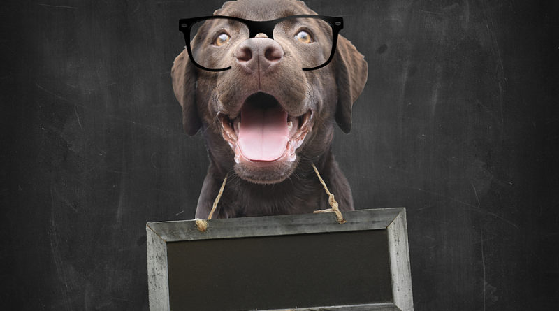 Dog School Teacher © bigstockphoto.com / manonteravest