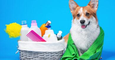 dog bath time © bigstockphoto.com / Masarik