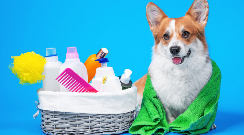 dog bath time © bigstockphoto.com / Masarik