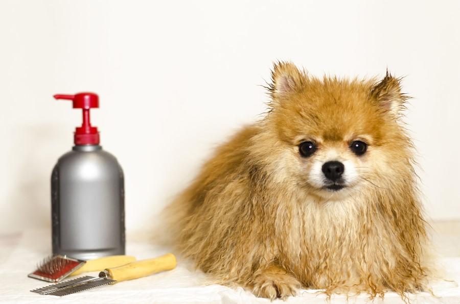 bath and grooming time © bigstockphoto.com / ElenaYakimova