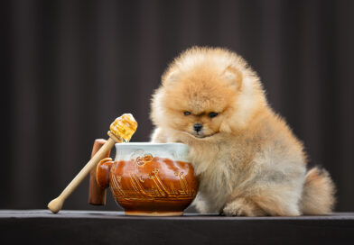 Can dogs eat honey? is honey bad for dogs?
