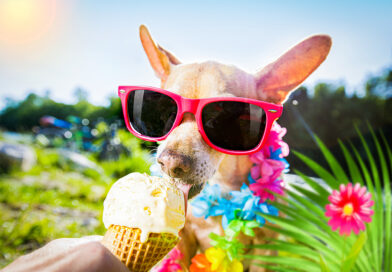 can dogs eat ice cream? is is safe?