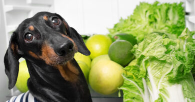 can dogs eat lettuce?